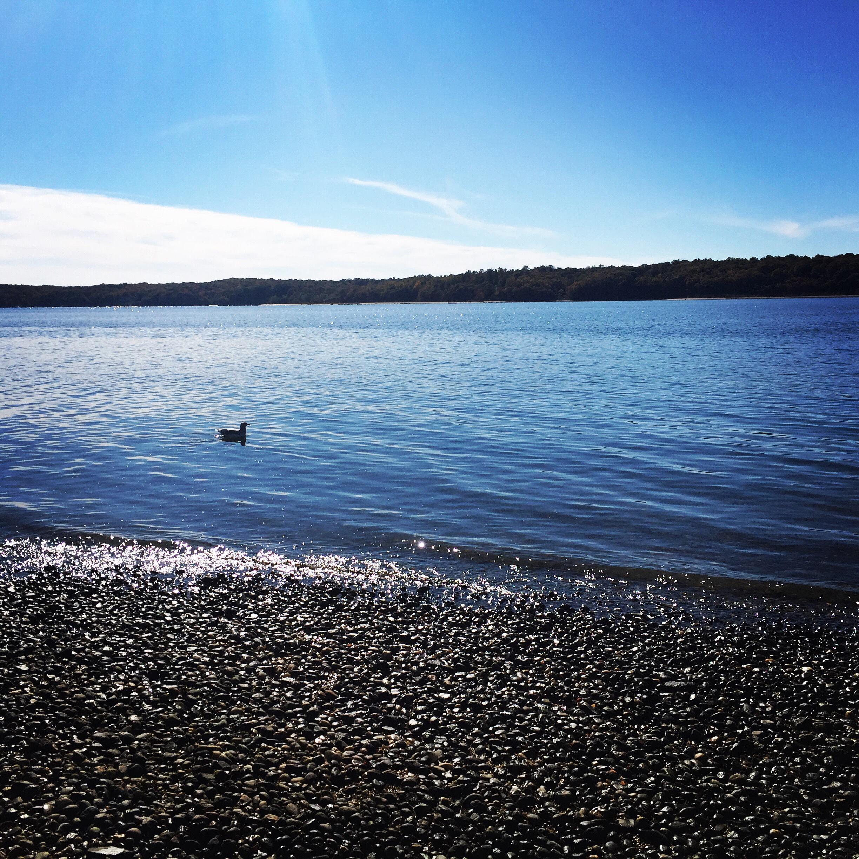 Fall Beach Day