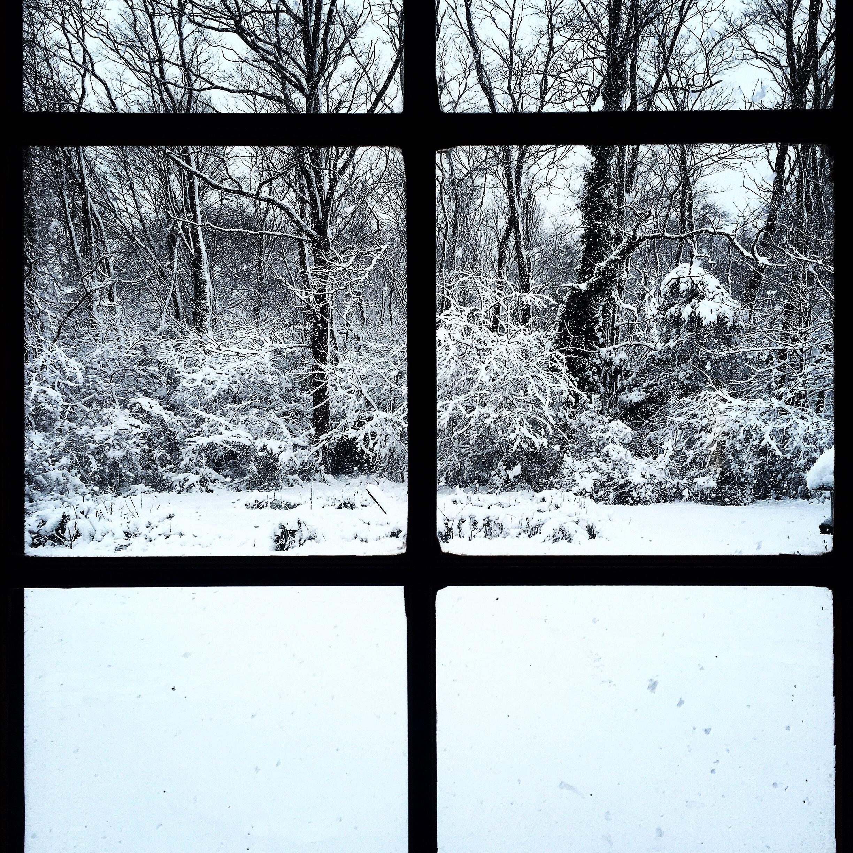 Snowstorm Snaps