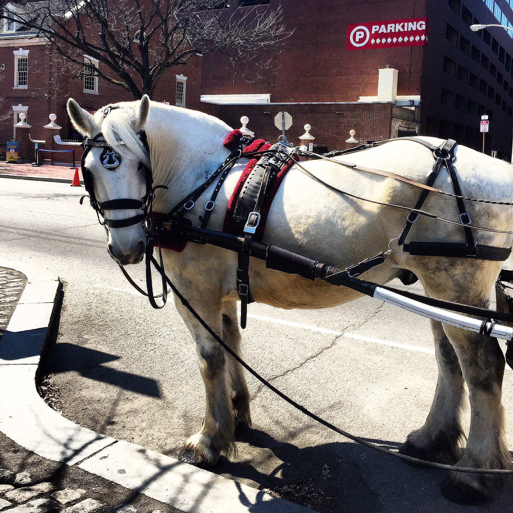 Horses of Philadelphia