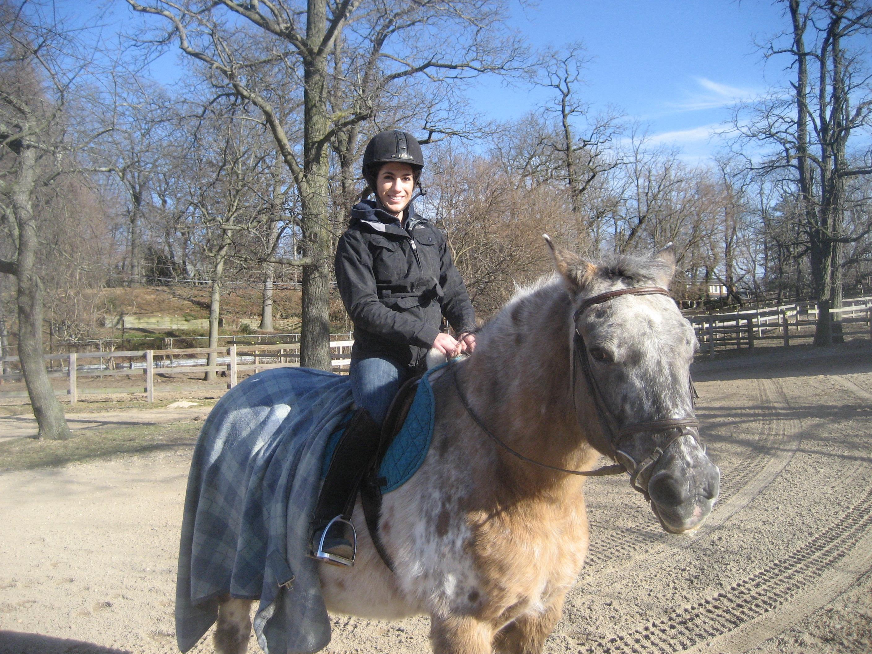 Tim - Horse