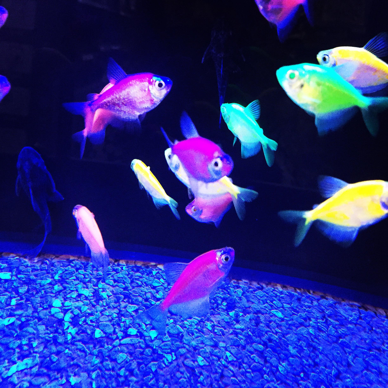 Glow Fish