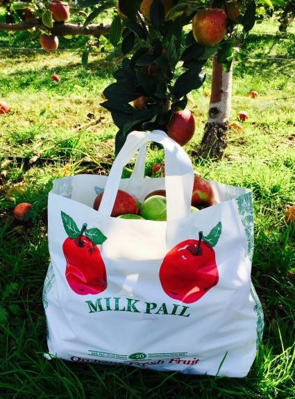 Fall Fun: Apple Picking at The Milk Pail