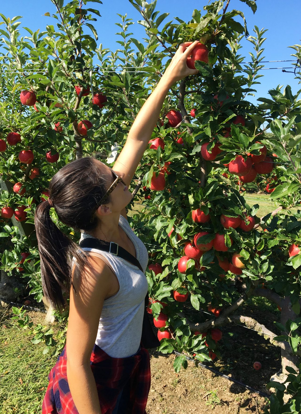 Fall Fun: Apple Picking at The Milk Pail